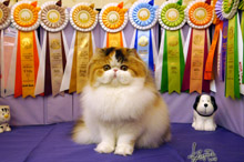 Silly to kitten show 0223