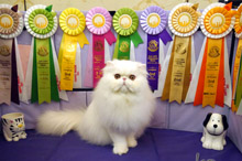 Beckham to kitten show 0223