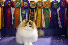 Silly to kitten show 0328