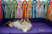 Silly to kitten show 0418