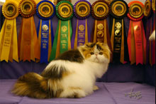 Silly to kitten show 0426