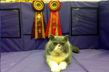 Edenduc to kitten show