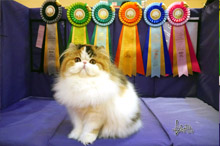 Silly to kitten show 0228