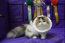 Silly to kitten show 0315