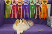 Silly to kitten show 0412